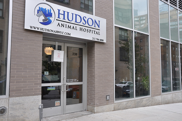 Commercial Architecture Project, Veterinary Hospital NYC